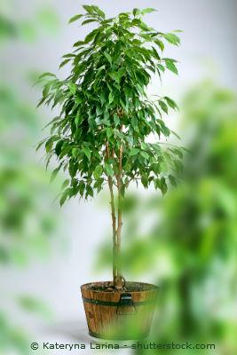 Buropflanzen Tipps Und Tricks Zur Burogestaltung