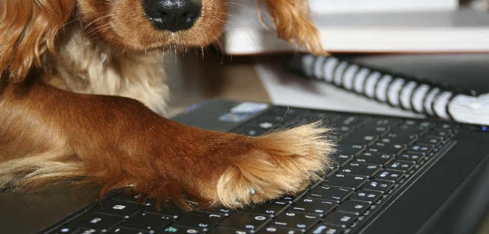 Hund mit Pfote auf Tastatur